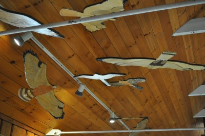 Bird silhouettes hang from the ceiling of the Discovery Room