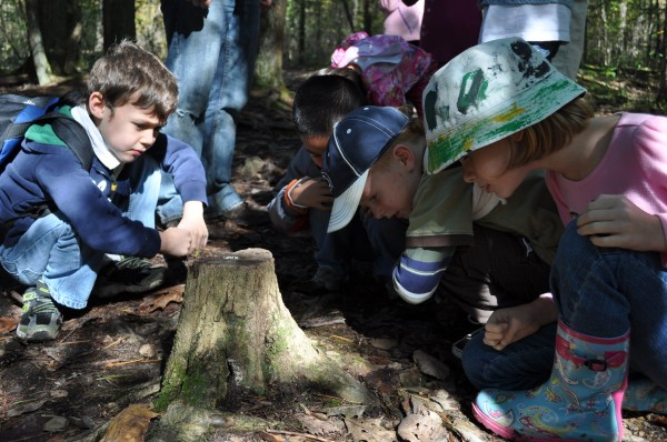 Students on a field trip examine a tree stump